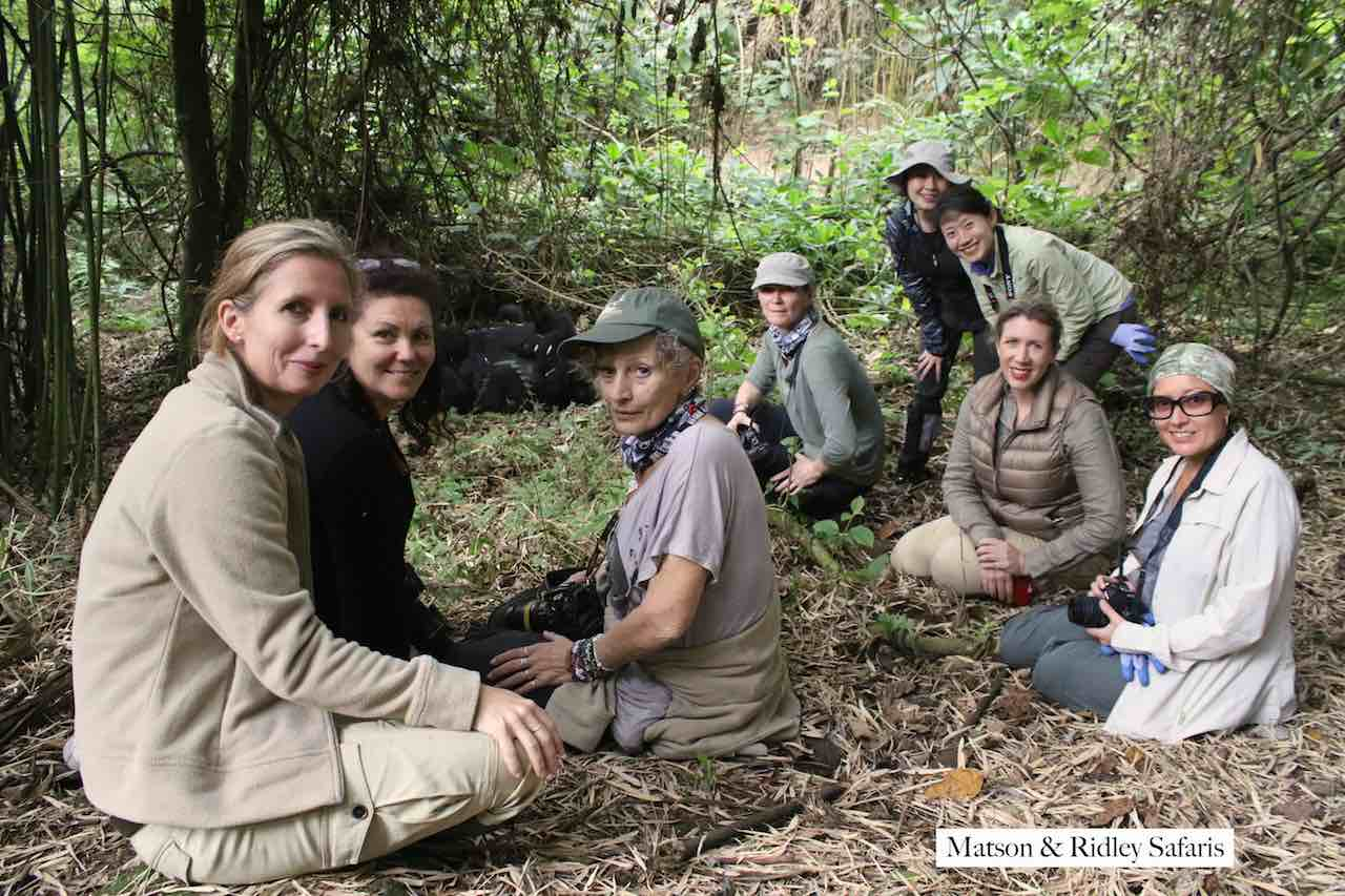 group at gorillas low res
