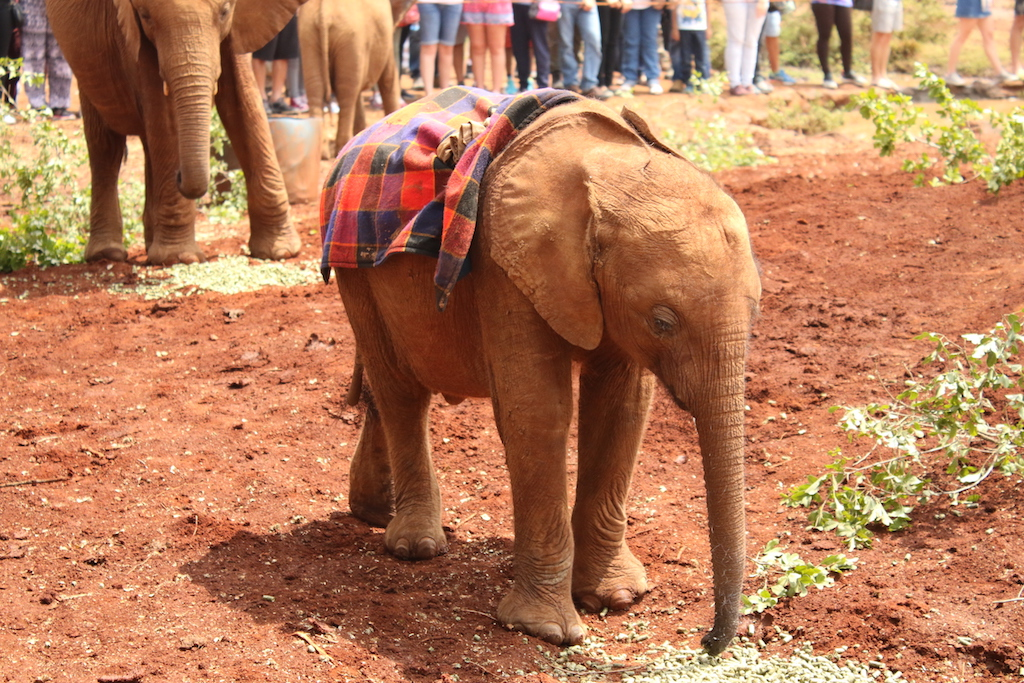 Orphan DSWT