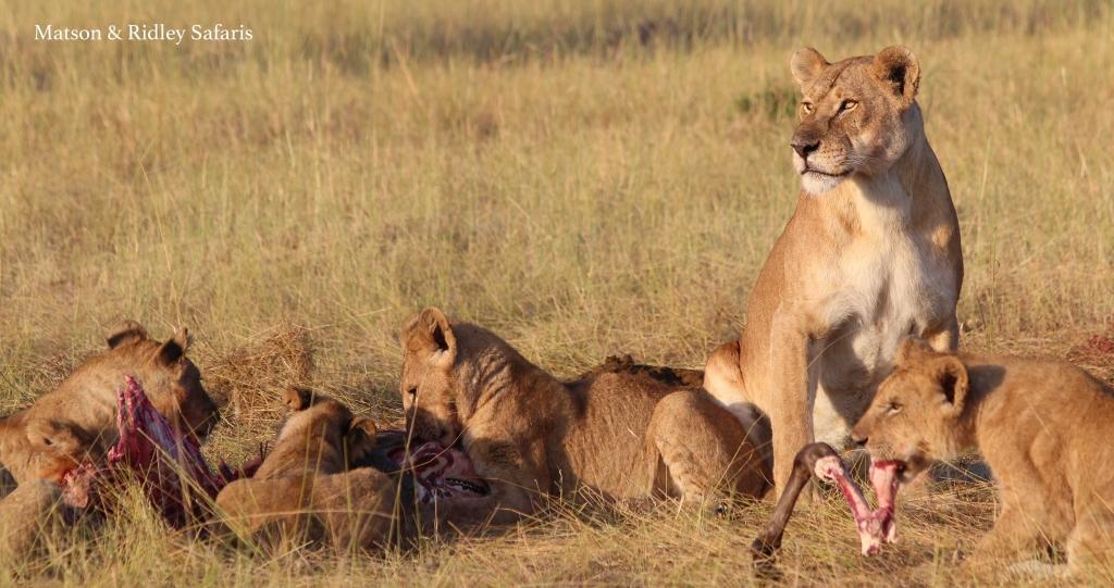 lion breakfast