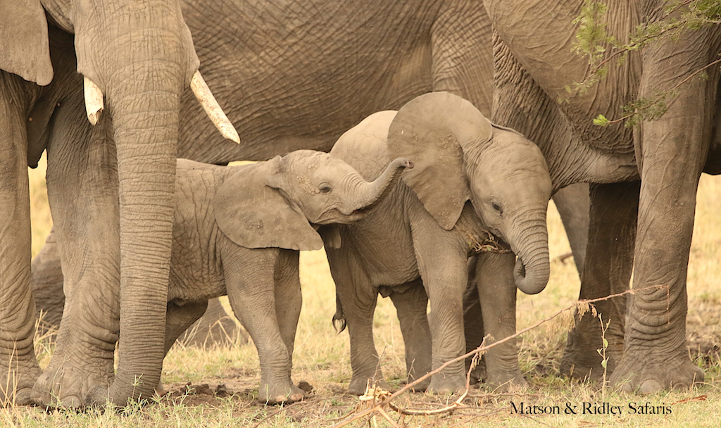 little eles reduced for blog